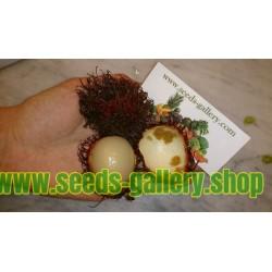 Semi di Rambutan (Nephelium Lappaceum) Frutta esotica