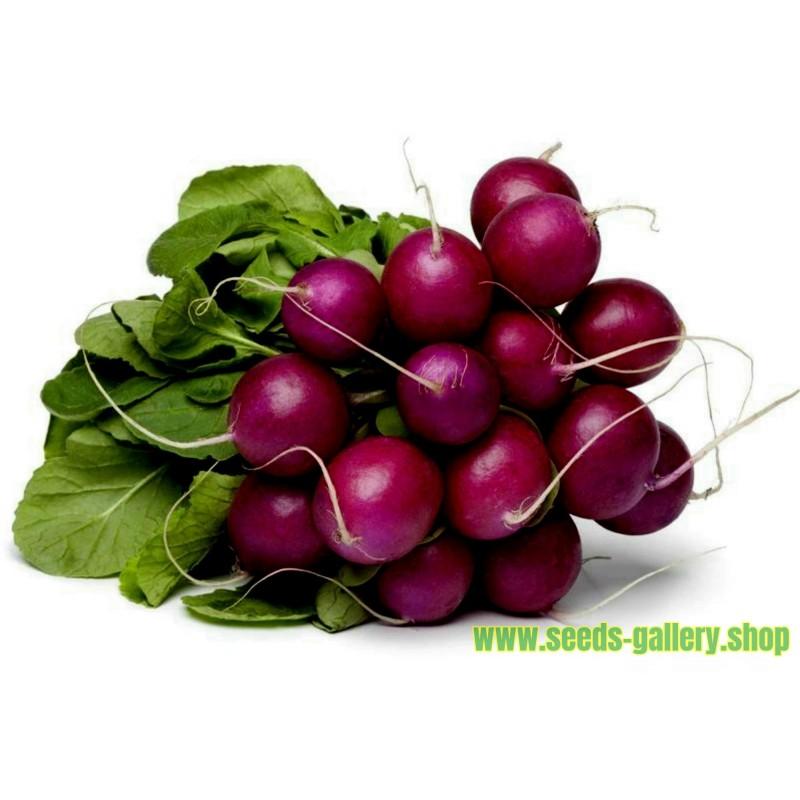 Purple Plum Radish Seed