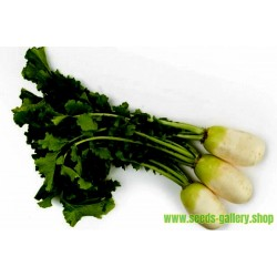 Native Korean Radish YEOL MOO Seeds