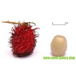 Rambutan Seme Egzoticno Voce