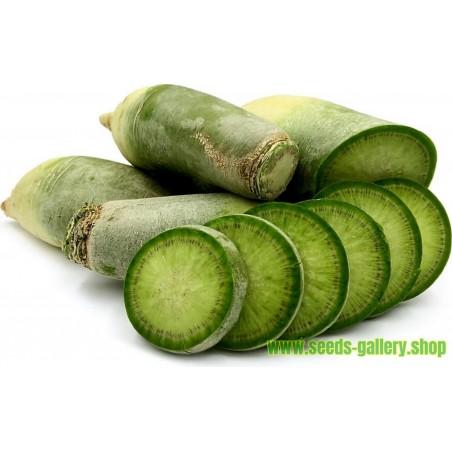Sementes de Rabanete Verde Chino Luobo