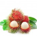 Rambutan Samen (Nephelium lappaceum)