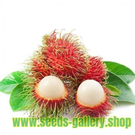 Sementes de Rambutão (Nephelium lappaceum) Frutas exóticas