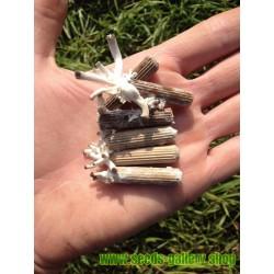 Sementes - Micélio de Reishi - Cogumelo Da Imortalidade (Ganoderma lucidum)