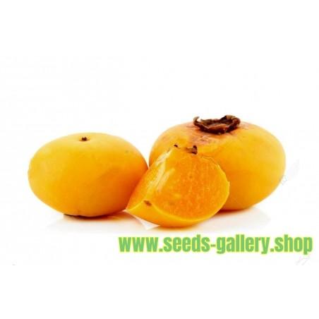 Semi di MELA D'ORO - molto fragrante Delicious unico Raro (Diospyros decandra)