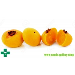Σπόροι Χρυσό μήλο - πολύ αρωματικό Delicious μοναδικό Σπάνιο (Diospyros decandra)