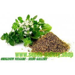Oregano Seeds Greek Herb