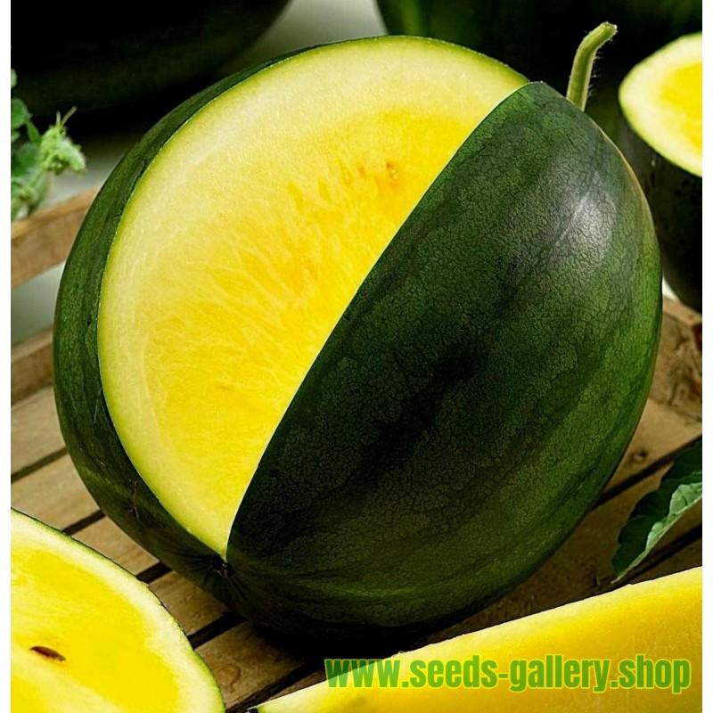 Melancia amarela JANOSIK 100 Sementes