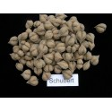 Retko Voce - Rusty sapindus Voce Seme (Lepisanthes rubiginosa)