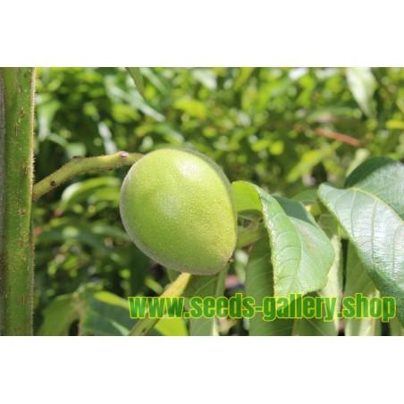 Heartnut Seeds - Juglans Ailantifolia Cordiformis
