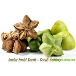 Sacha Inchi Fröer, en Amazon gåva (Plukenetia volubilis)