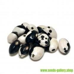 Semi Di Fagioli Calypso - Orca - Yin Yang