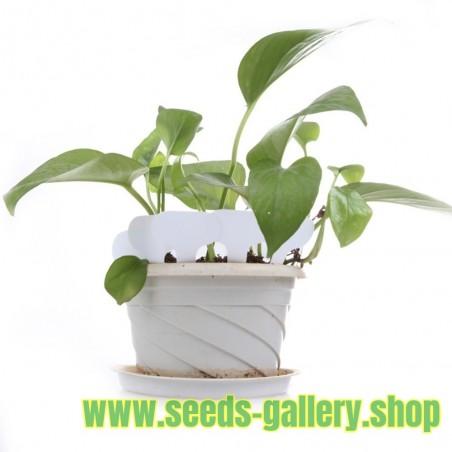 Kunststoff Garten Etiketten Pflanzen Label Marker