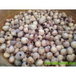 Sementes Midgen Berry (austromyrtus dulcis)