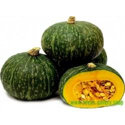 Green Kabocha - Hokkaido Squash Seeds