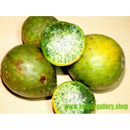 Pecan Seeds (Carya illinoinensis)