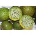 Graines de Noix de Pécan - Pacanier (Carya illinoinensis)