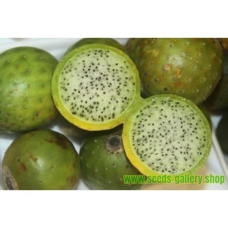 Semi di Chona – Guacalla - Sanky (Corryocactus brevistylus)