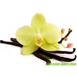 """Semillas de Vainilla """"Bourbon"""" (Vanilla planifolia)"""