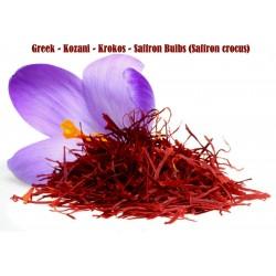 Semillas de Azafrán (Crocus sativus)