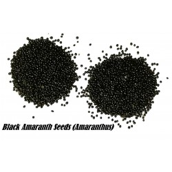 Black Amaranth Seeds (Amaranthus)