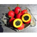 Raue Stechwinde Samen – Saatgut (Smilax aspera)