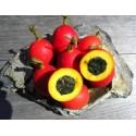 Semillas de Zarzaparrilla o Zarza Morisca (Smilax aspera)