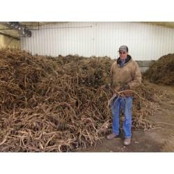 Ren – Hren Seme (Armoracia rusticana)