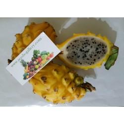 Sementes (100) de Fruta do dragão amarelo - Raras Exóticas