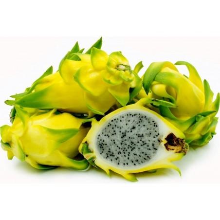 100 Sementes de fruta do Dragão Amarelo (Hylocereus undatus)