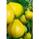 Fruit and Vegetable Mould, Heart Shape, Change Fruits Shape
