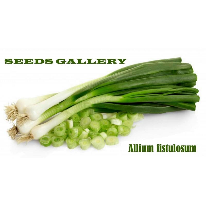Sementes de Cebolinha Verde Chives (Allium Fistulosum)