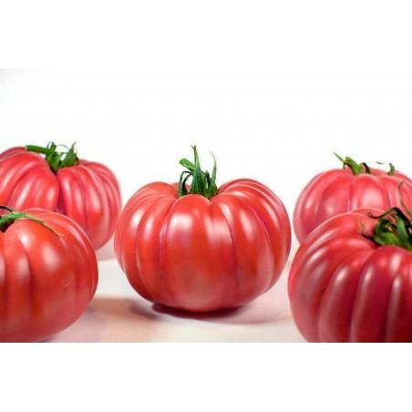 "Graines de tomate rose Nervures ""Monte Rosa"""