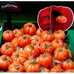 """Semillas de tomate acostillado """"Monte Rosa"""""""