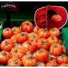 """Σπόροι Ροζ Πλευρωτός Ντομάτα """"Monte Rosa"""""""