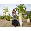 Turmeric Live Rhizomes (Curcuma longa)