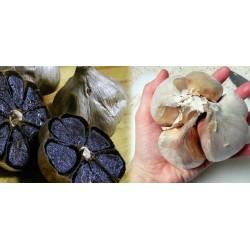 Graines de Pêche plate de Chine (Prunus persica var. platycarpa)