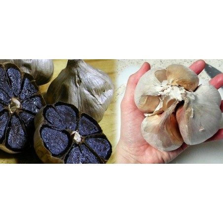 Schwarzer Knoblauch Zehen (Allium roseum)