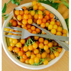 Sementes de PÉROLAS DE OURO (Solanum villosum)
