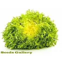 Zuta Endivija GIALLA A COUORE PIENO Seme (Cichorium endivia)
