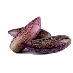 Seltene Lila Riesen-Pepino Samen (Solanum muricatum)
