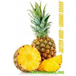 "Ananas Seeds ""pineapple"""
