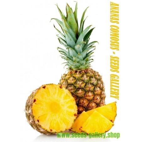 Semillas de Ananás (Ananas comosus)