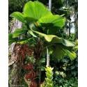 Förökning - sådd Passiflora Fröer