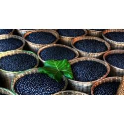 Maqui Berry Seme Super Voce (Aristotelia Chilensis)