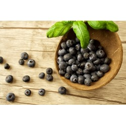 Sementes Maqui Berry Super Fruta (Aristotelia Chilensis)