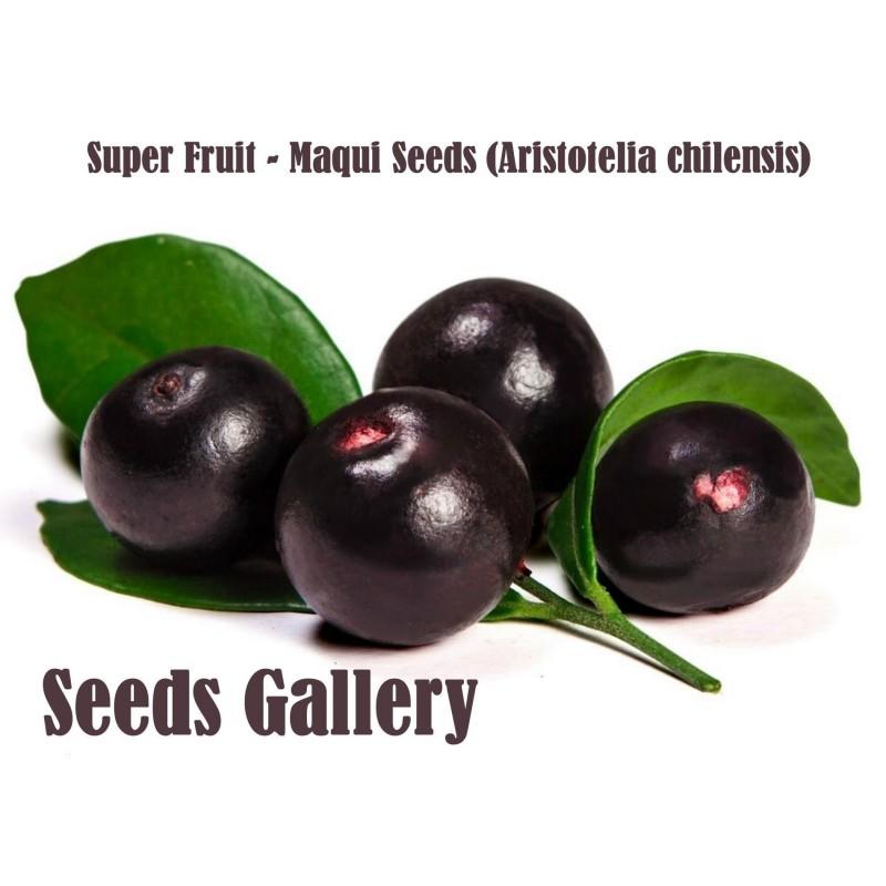 Maqui Berry Superfrukt Frön (Aristotelia Chilensis)