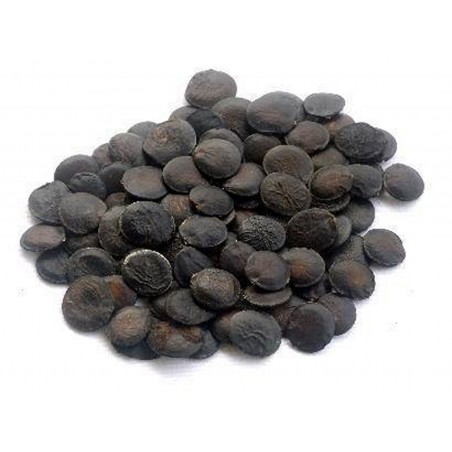 TITAN ARUM Seeds (Amorphophallus titanum)