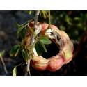 Moules à fruits : Façonnez des fruits aux formes extraordinaires