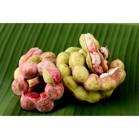 Manila Tamarind Frön (Pithecellobium dulce)